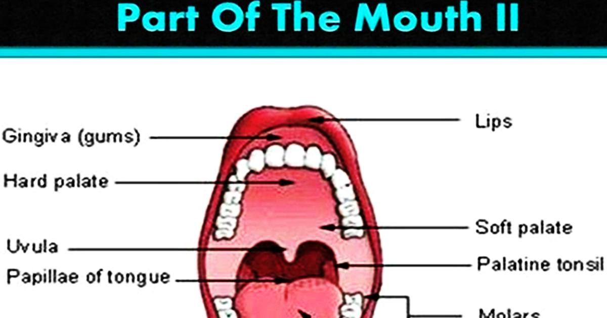Vocabulary: Parts of the Mouth 5
