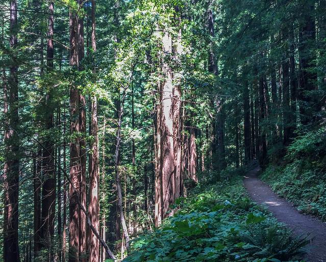 Craig Britton Trail