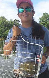 A hungry terrapin inside a collapsible crab trap