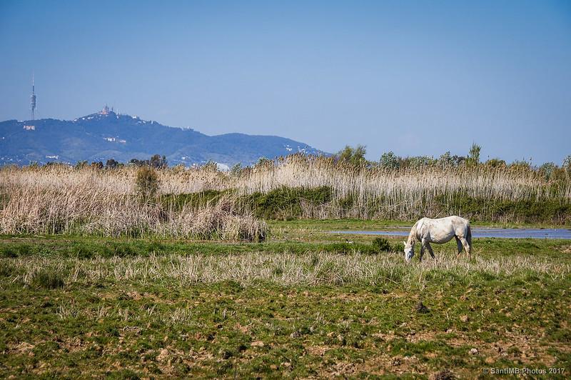 Marisma del Delta del Llobregat