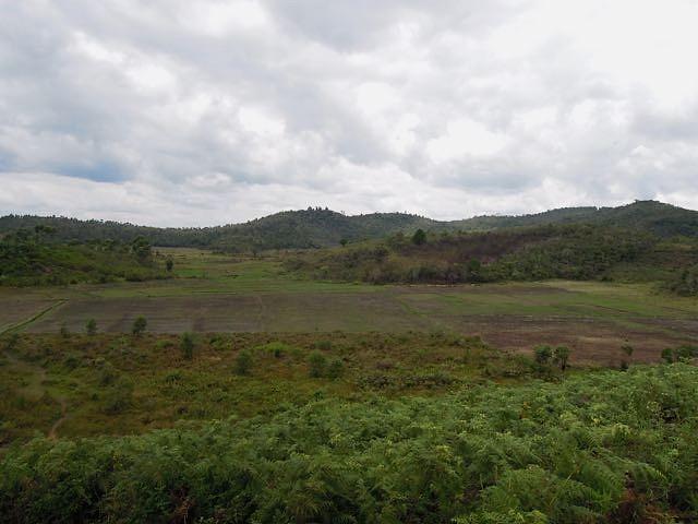 Torotorofotsy是一濕地保護區,但其70%的濕地早已成為當地居民賴以為生的稻田。攝影:賀彥儒