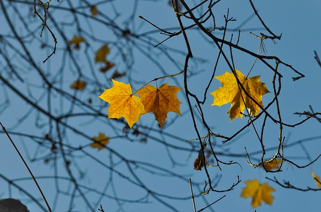 September Investment Outlook white papers autumn leaves