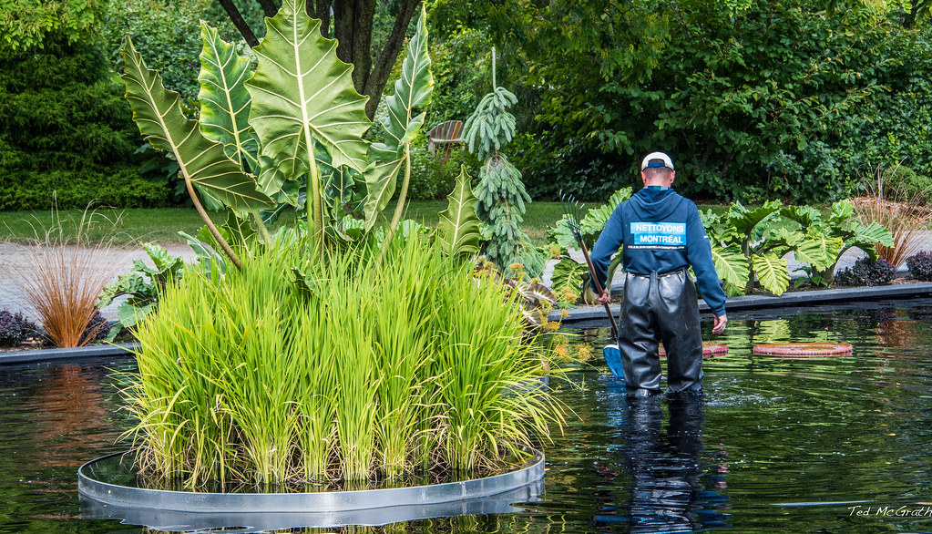 2017 montreal botanical garden by teds photos for me you - Montreal Botanical Garden