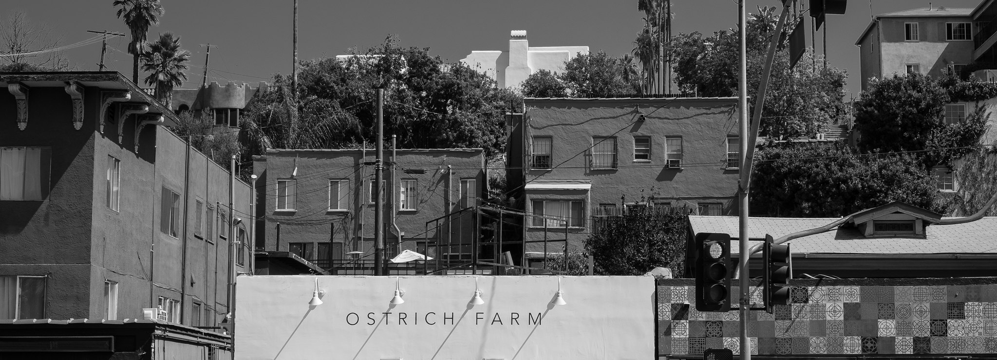 Ostrich Farm | by michaelj1998