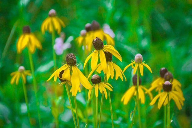 Wildflowers of Yellow