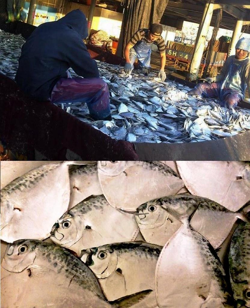 【永續海鱻食堂】沒有健全的食魚教育,何來海鮮文化?