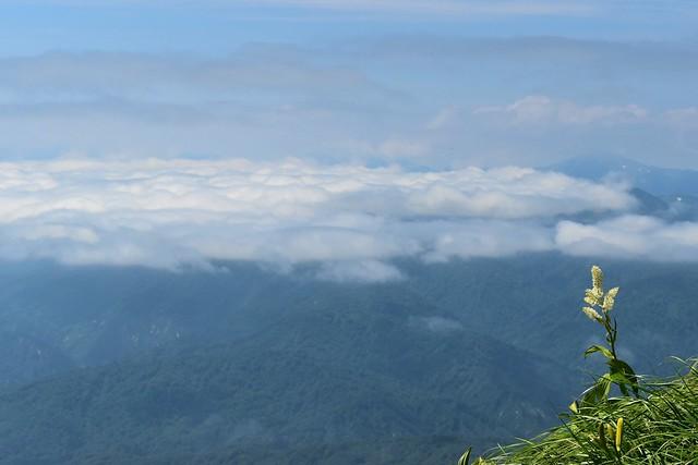 雲海とコバイケイソウ
