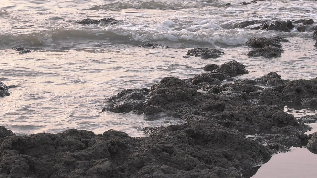 藻礁大未來919-1-3