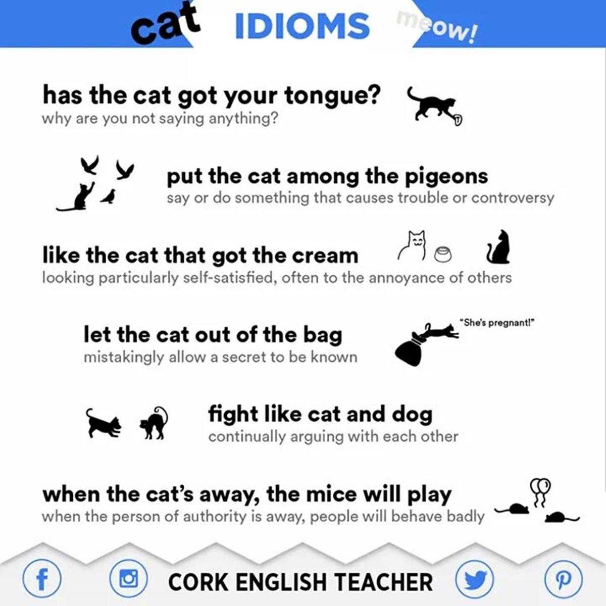 English Idioms: Cat 3