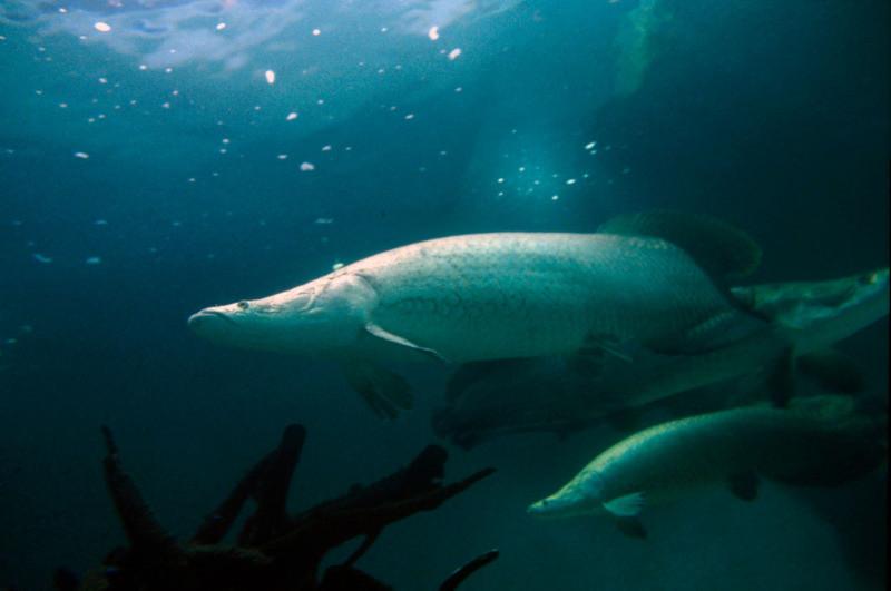 作者:Michel Roggo;圖片來源:WWF