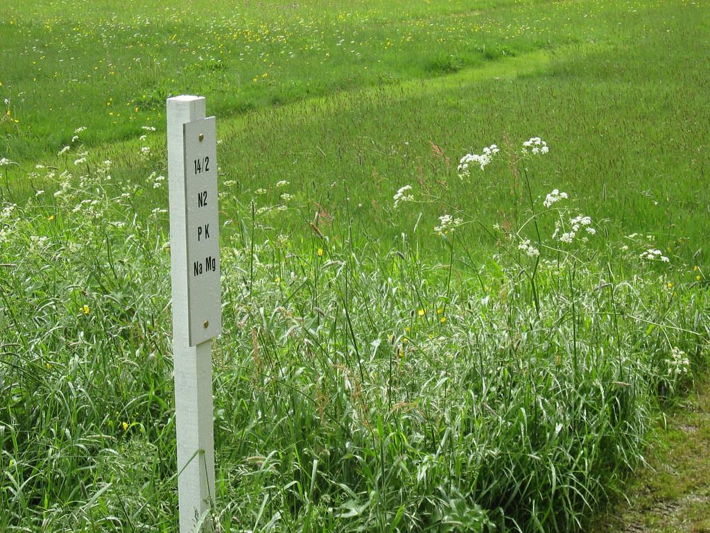 park grass
