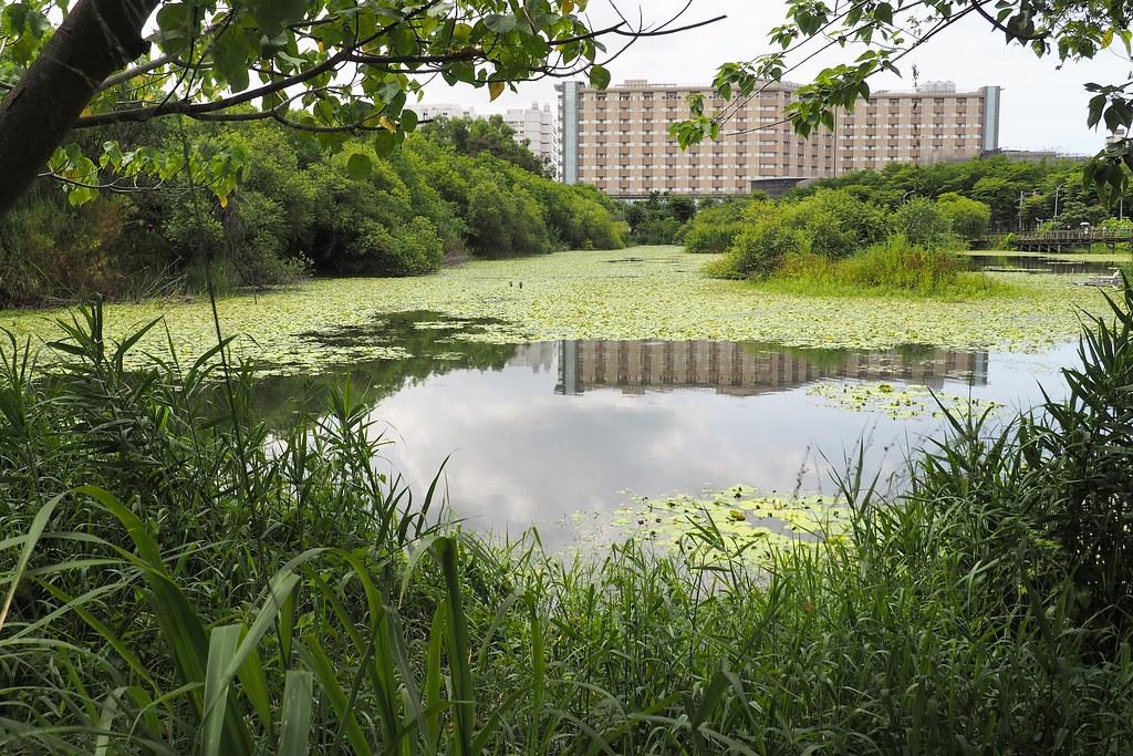 鳥松濕地是全國第一個濕地公園。攝影:李育琴。