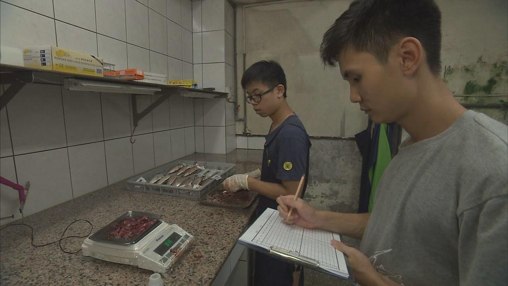 921-1-7 海洋大學學生每天把魚市場的鯖鰺科魚隻,測量體長,剖開檢查內臟、生殖系統,進行研究。