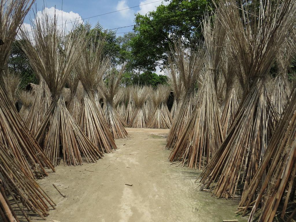 A Village Path Through Jute Sticks In Bangladesh Jute