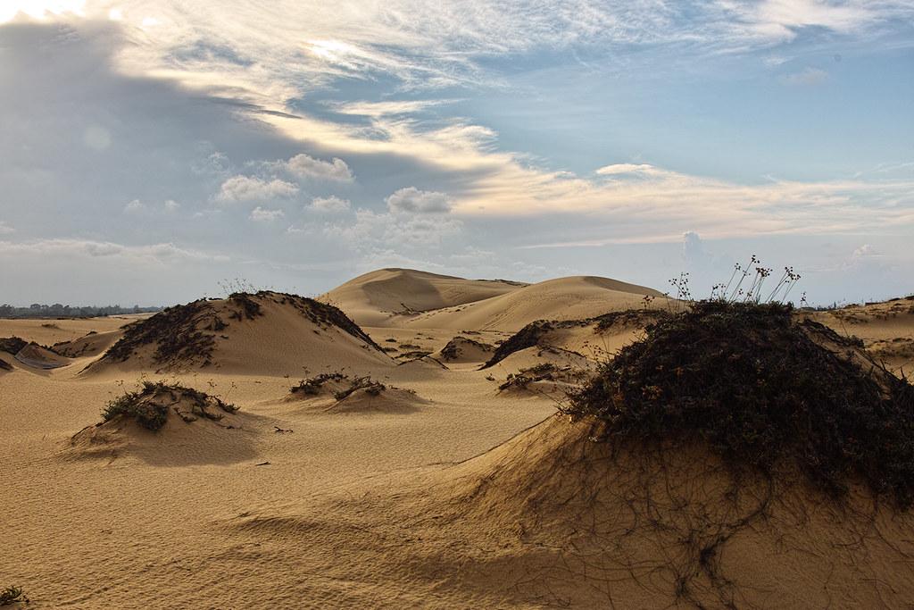 Cồn cát Quang Phú với những cây bụi dại