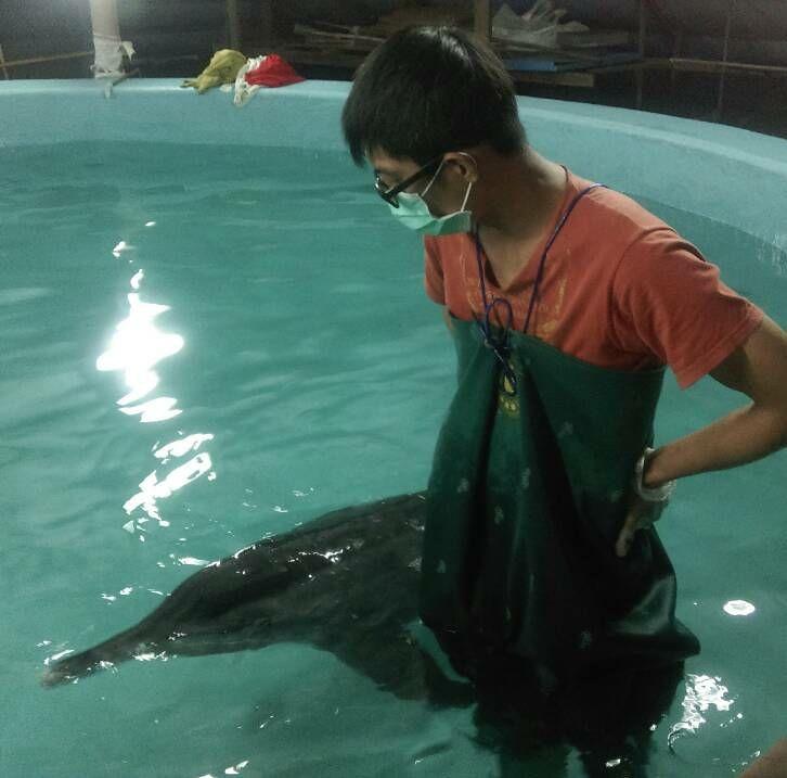 擔任救援鯨豚志工時所攝,李昕育提供