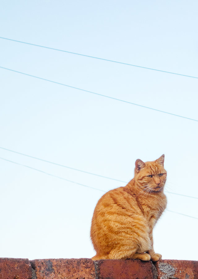 moody looking ginger cat