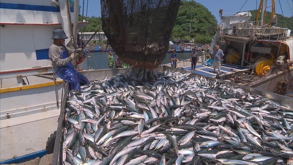 921-1-1 漁工們忙著將剛從海中捕來的新鮮鯖魚,從船艙中一批批裝進卡車裡,準備送往市場和加工廠。