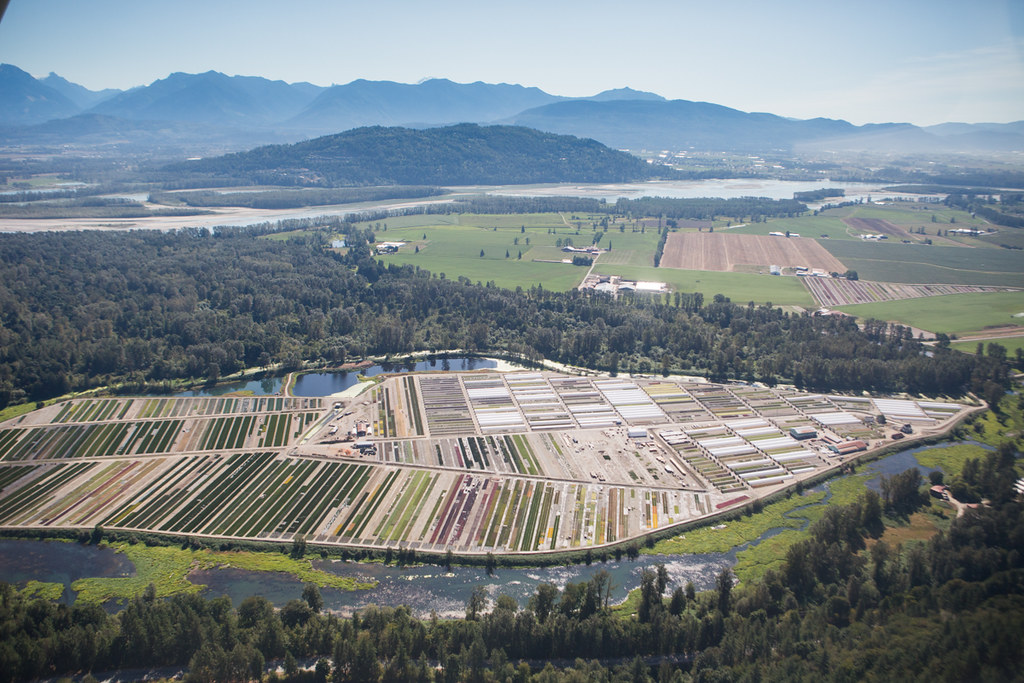 Greenhouses alond the river in the Fraser Valley