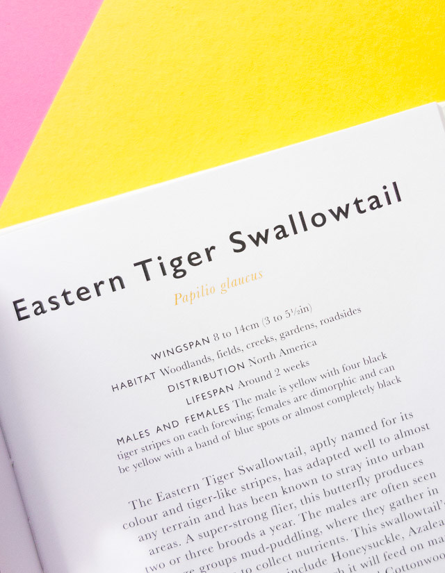 eastern tiger swallowtail info