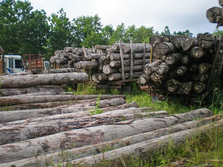 Log yard for illegal logging | by CIFOR