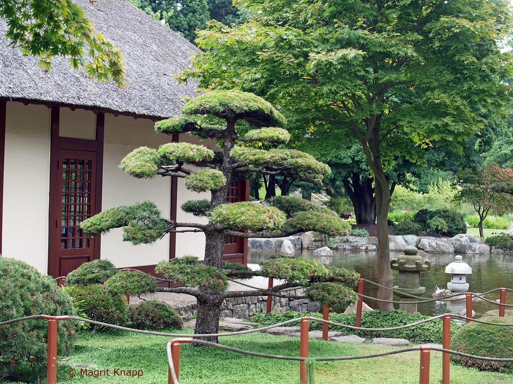 japanischer garten l dt zum meditieren ein in planten un flickr. Black Bedroom Furniture Sets. Home Design Ideas