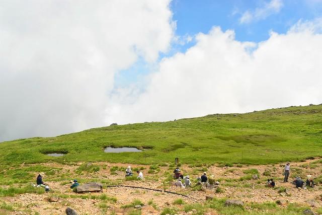 月山山頂の湿原