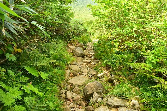 大日平までの岩の登山道