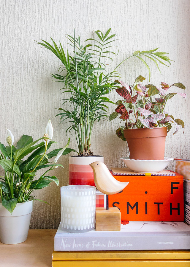 peace lily, parlour palm and fittonia