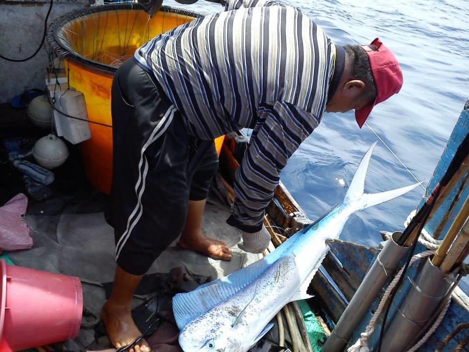 我國對於鬼頭刀的商業捕撈,以延繩釣或曳繩釣為大宗漁法。(吳允暉提供)