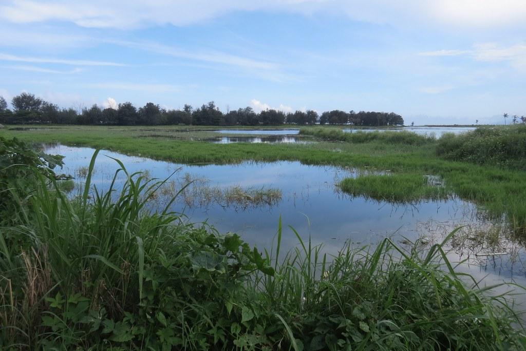 2016年尼伯特颱風前的知本濕地。蘇雅婷攝
