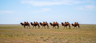 Heading South Mongolia | by Worldwide Ride.ca