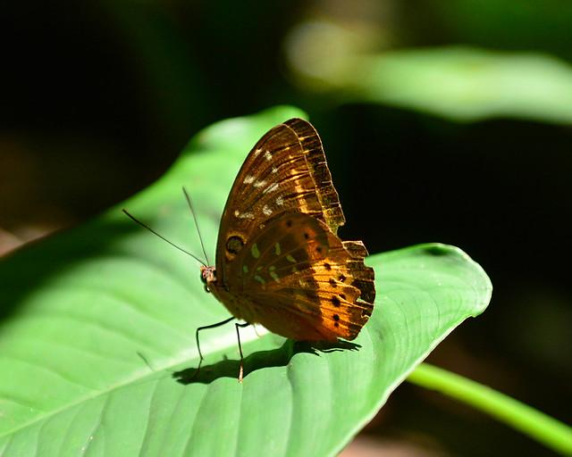 Una mariposa posada en una hoja del Handmade Forest de Filipinas