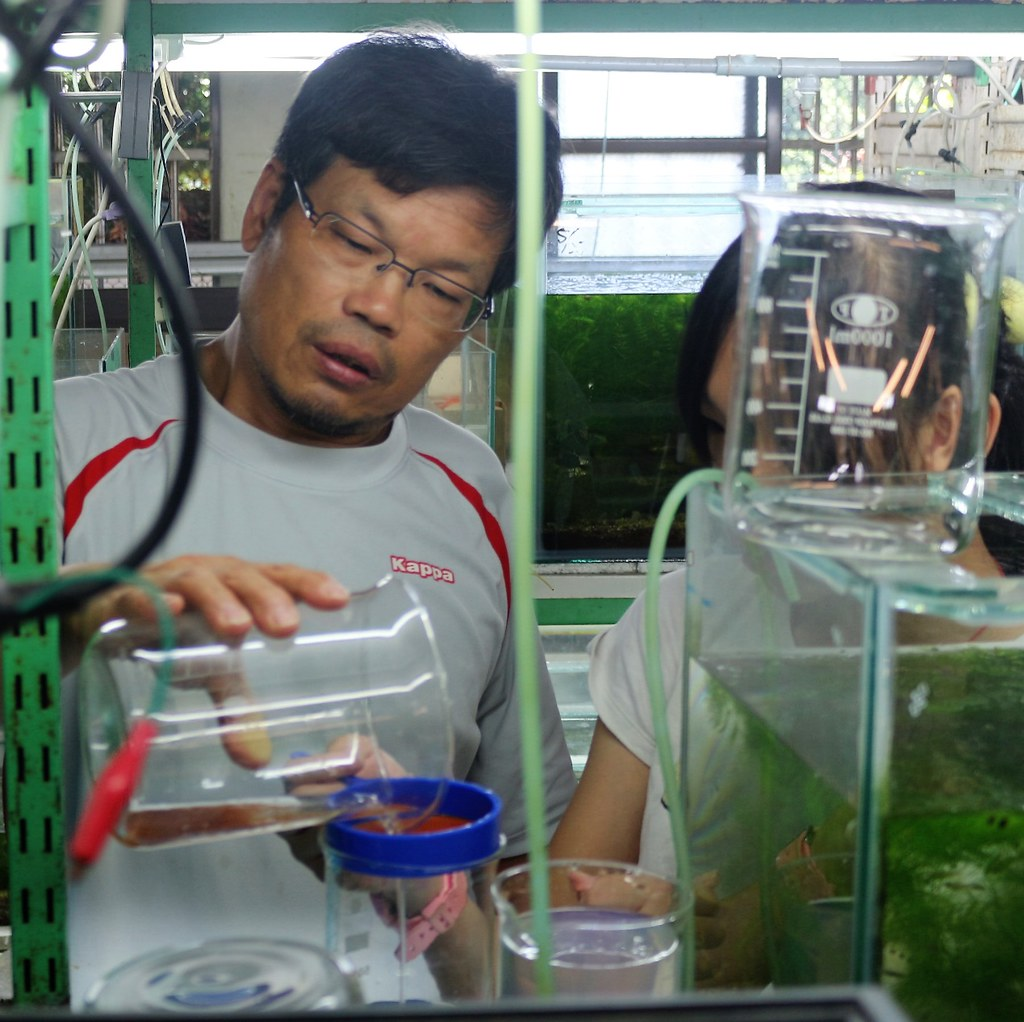 鍾宸瑞希望能盡一己之力,將台灣原生淡水魚推廣出去。攝影/楊孟軒