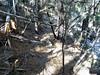 Entre la brèche et la confluence Frassiccia : vues du parcours de l'ancien chemin d'exploitation à la Carciara