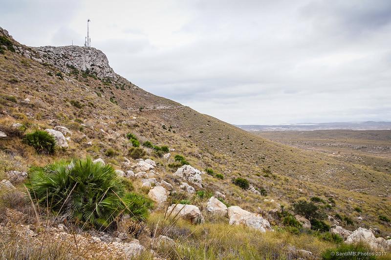 Palmitos en la cara norte de la Mesa Roldán