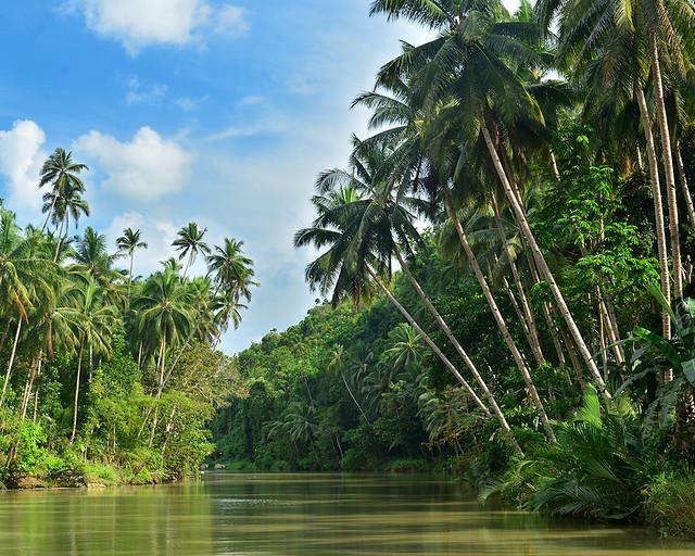 Paisaje de palmeras sobre el rio Loboc en Filipinas