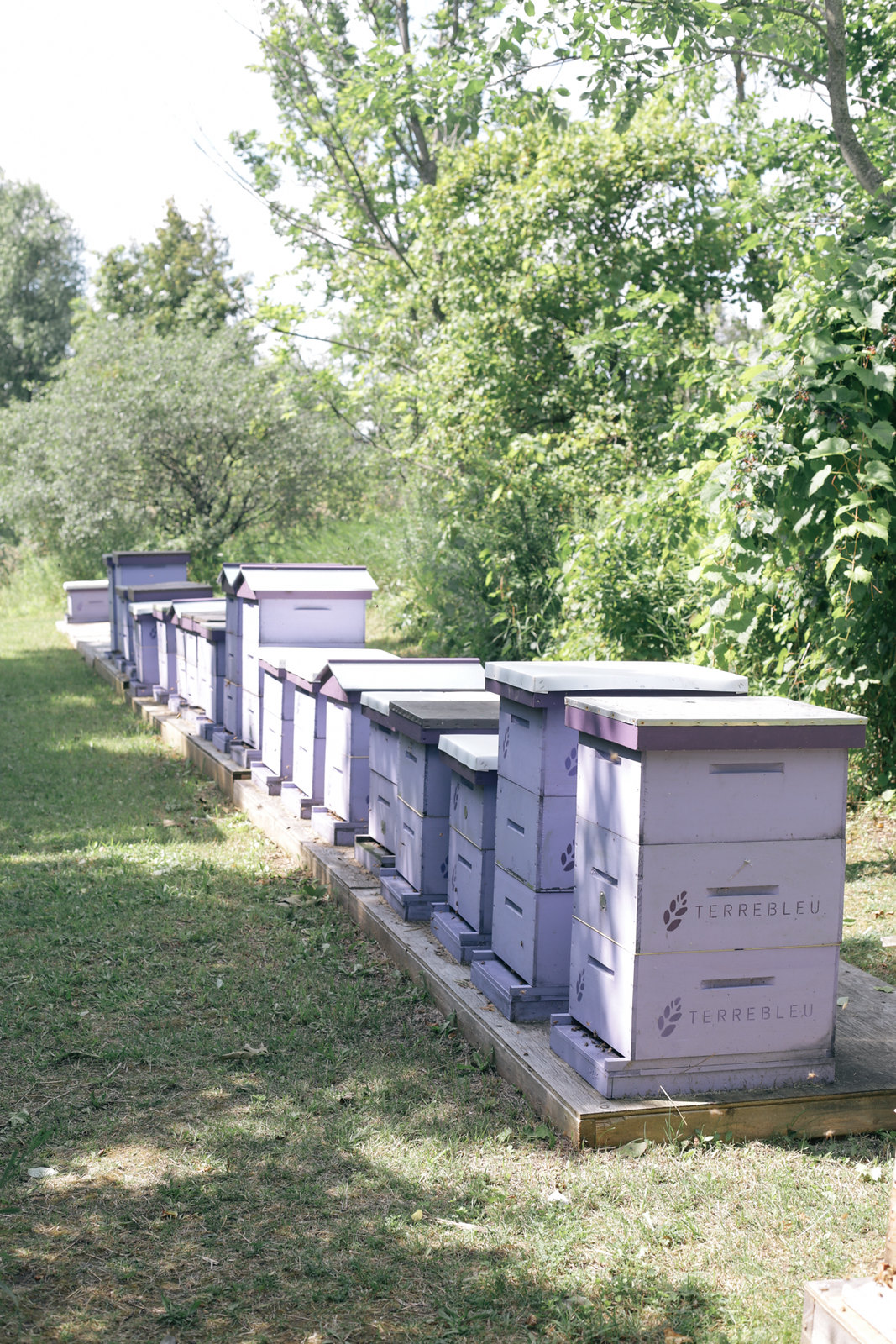 purple bee boxes