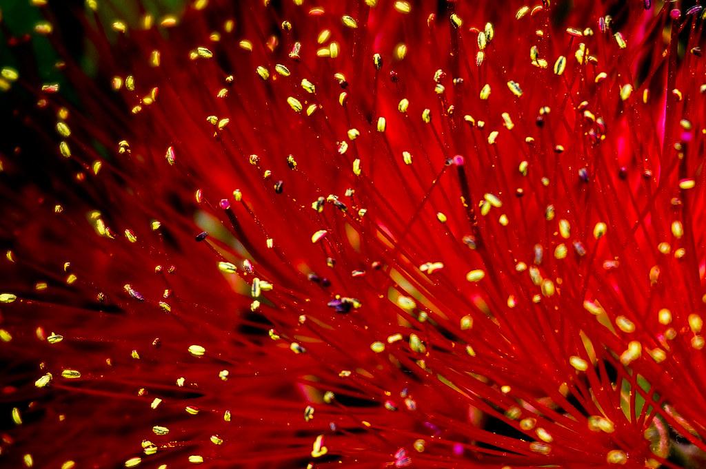 Fleur Feu D Artifice A Naples San Leucio Beatrice Bdm Flickr
