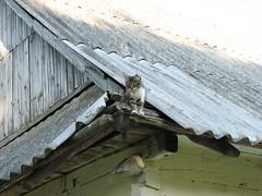 Котик на горищі