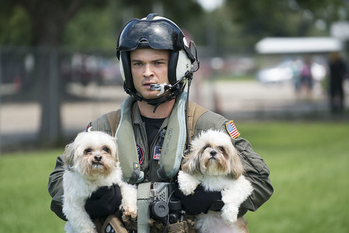 Naval Aircrewman (Helicopter) 2nd Class Jansen Schamp rescues two dogs after flood waters from Hurricane Harvey reached the grounds of a shelter. | by Official U.S. Navy Imagery