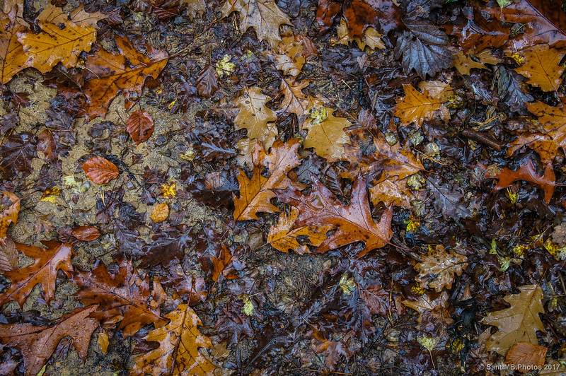 Hojas secas en el bosque de los Robles Milenarios de Danbulintxulo