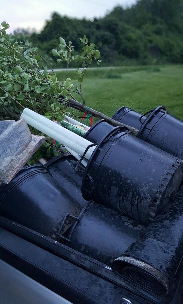 tree planting Ontario