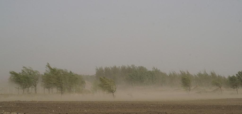 地處內蒙高原到遼西的過渡帶上,阜新周邊的農村裡,因為長期被風吹,樹都向一邊倒。攝影:Stam Lee