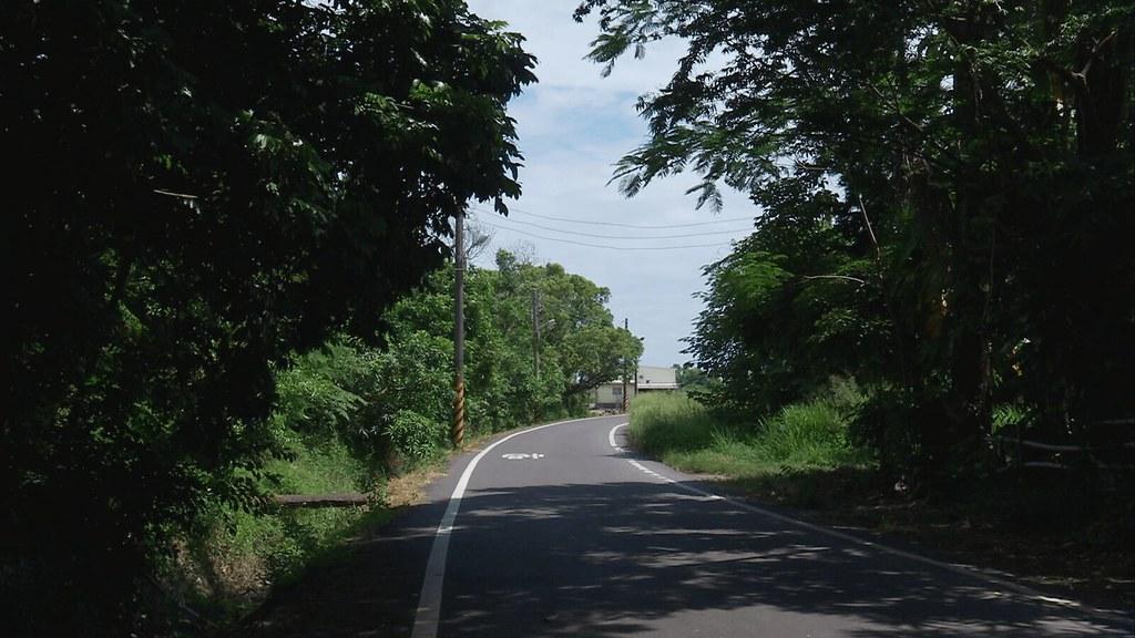 925-2-11 外環道計畫首當其衝的,是兩旁現有的綠樹,依存綠帶的生物,將因開路而失去棲息空間。
