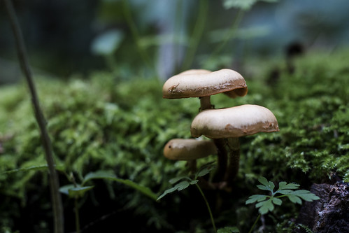 Mushrooms | by strumswell