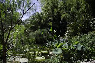 Le Jardin Nelumbo