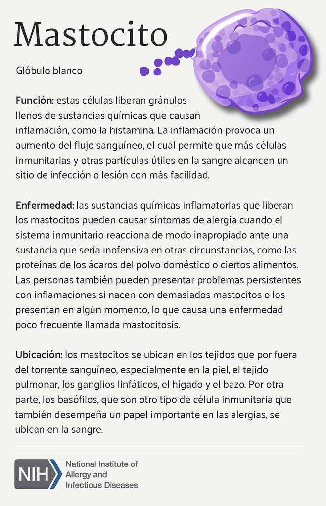 Mastocito (Mast Cell) | Función de los mastocitos, relación … | Flickr