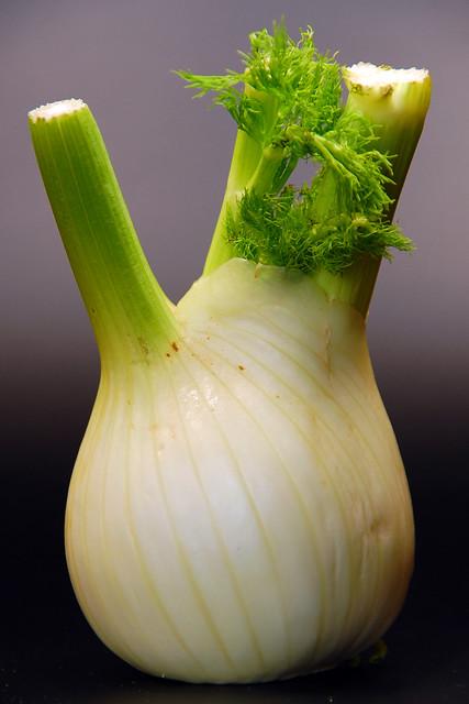 Fenchelknolle (Foeniculum vulgare) ... Brigitte Stolle
