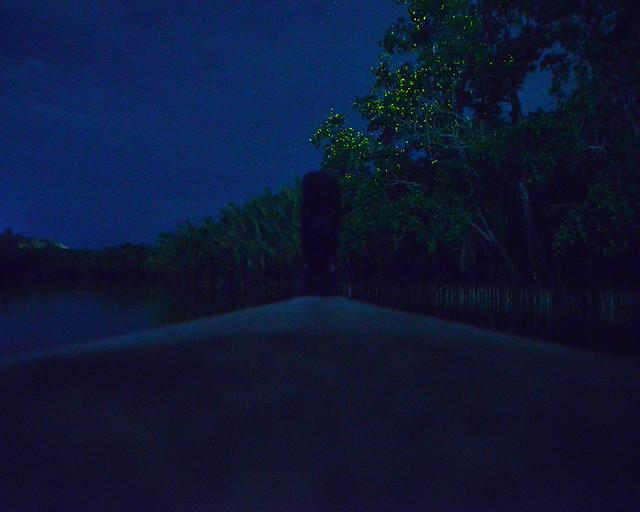 Una de las cosas que hacer en Filipinas más alucinantes, las luciérnagas por el rio Loboc